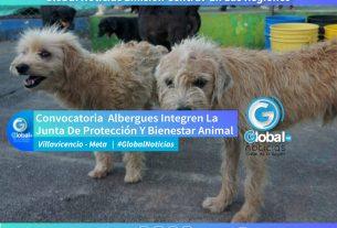 Convocatoria Para Que Albergues Integren La Junta De Protección Y Bienestar Animal