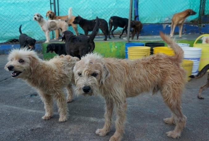 Empieza Convocatoria Para Que Albergues Integren La Junta De Protección Y Bienestar Animal De La Ciudad