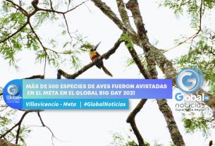 Más de 500 especies de aves fueron avistadas en el Meta en el Global Big Day 2021