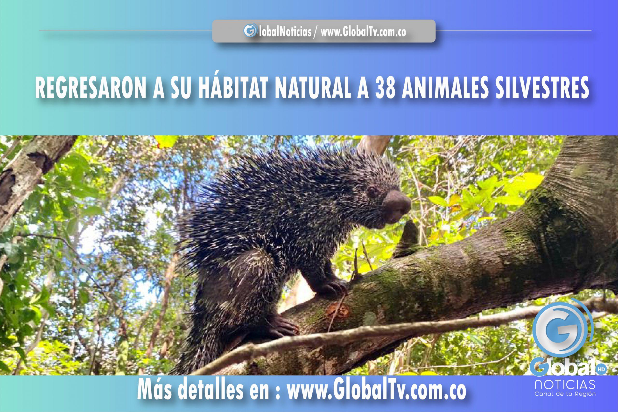 REGRESARON A SU HÁBITAT NATURAL A 38 ANIMALES SILVESTRES