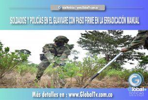 SOLDADOS Y POLICÍAS EN EL GUAVIARE CON PASO FIRME EN LA ERRADICACIÓN MANUAL